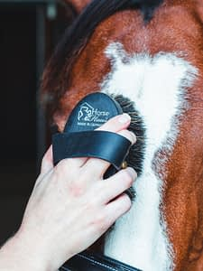 grooming a horse face and head with a soft face brush