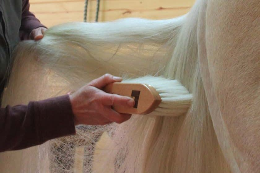 grooming a horse's tail